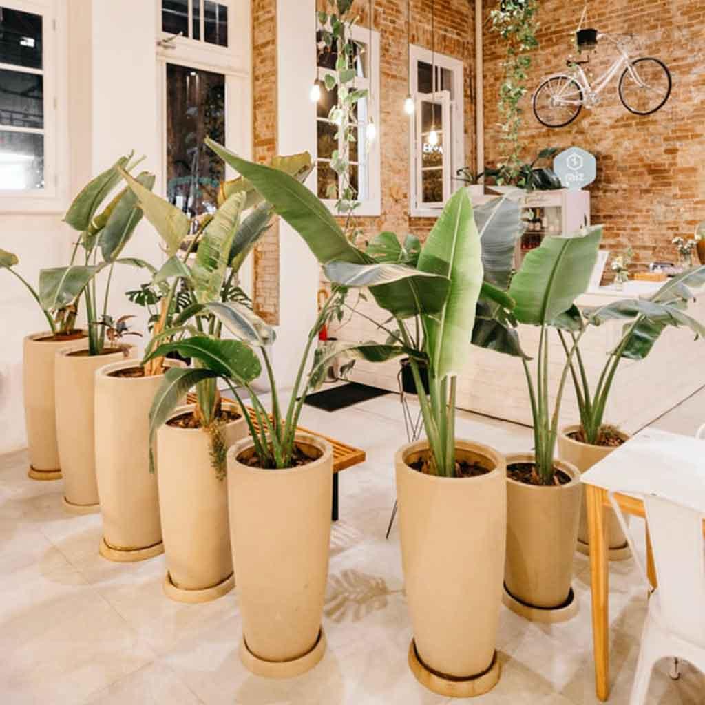 Plantas colgantes en hogar estilo Urban Jungle